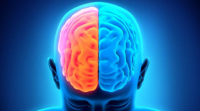 Left Brain Right Brain.jpeg